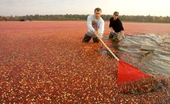 Cranberry Bogs Marshes Marketing Committee